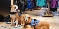 Koda and Tana shopping at Macpac